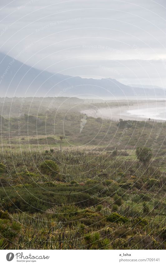 Ain't no Sunshine II Umwelt Natur Landschaft Pflanze Urelemente Luft Wasser Himmel Wolken Herbst Klima schlechtes Wetter Nebel Regen Sträucher Wildpflanze Alpen