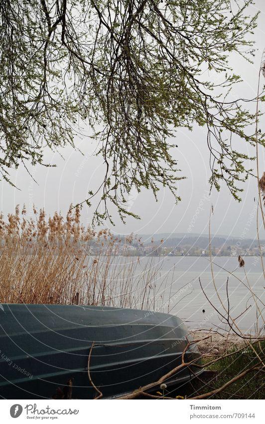 AST 7   Boot am See Ausflug Umwelt Natur Wasser Himmel Baum Schilfrohr Seeufer Bodensee einfach natürlich Gefühle ruhig Wasserfahrzeug liegen Farbfoto