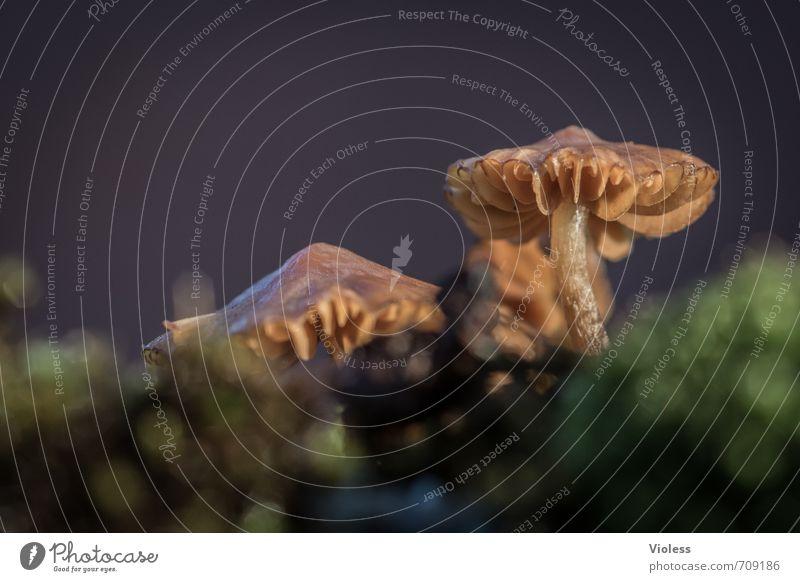 still standing Natur Pflanze dunkel Pilz Gewitter