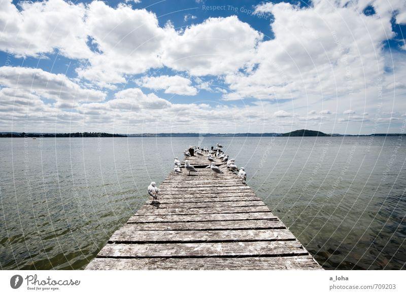 Zimmer mit Aussicht Natur Landschaft Tier Wasser Himmel Wolken Horizont Sommer Schönes Wetter Wärme Seeufer Lake Rotorua Stadt Steg Anlegestelle Wildtier Vogel