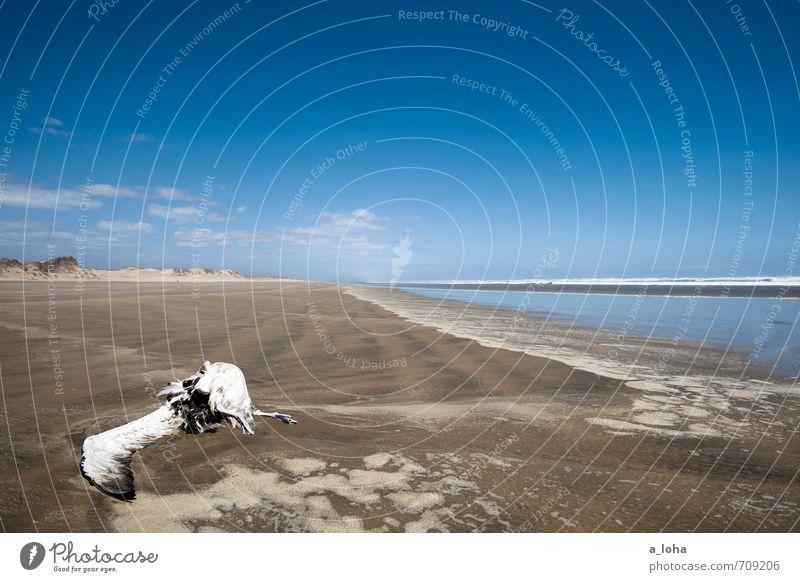 Deadline. Natur Landschaft Tier Urelemente Sand Wasser Himmel Wolken Horizont Sommer Schönes Wetter Wärme Küste Strand Meer Wildtier Totes Tier Vogel 1 Ende