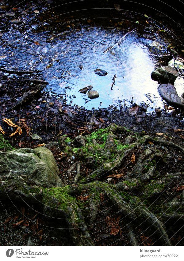 Auch ... Bach Rinnsal nass feucht Pfütze fließen flach Holz Strandgut Reflexion & Spiegelung Verkehrsstau Pflanze Wellen träumen Wurzel dünn Romantik Idylle