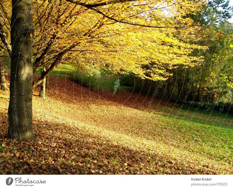 es wird Herbst Natur schön Baum Blatt gelb Wald Herbst Wiese Wege & Pfade Wärme Physik Jahreszeiten