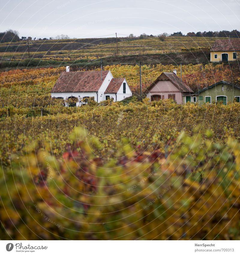 Wine Quarter im Quadrat Landschaft Herbst Pflanze Hügel Österreich Bundesland Niederösterreich Weinviertel Dorf Haus Einfamilienhaus Hütte Gebäude Gelassenheit