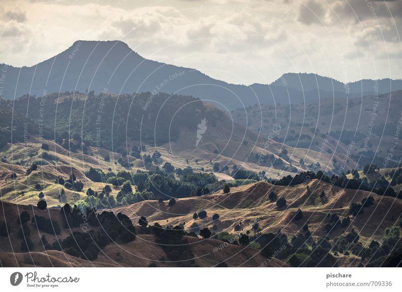 Erster Berg Natur Landschaft Hügel Felsen Berge u. Gebirge Vulkan eckig exotisch Abenteuer Ferien & Urlaub & Reisen Neuseeland Farbfoto Außenaufnahme Dämmerung