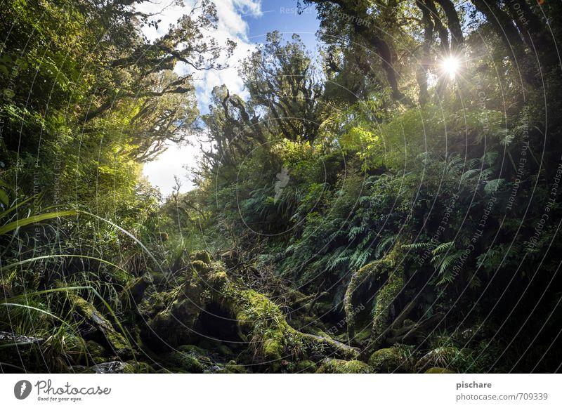 Pure Nature Ferien & Urlaub & Reisen Pflanze Sonne Baum Landschaft außergewöhnlich Sträucher Abenteuer exotisch Urwald Moos Neuseeland