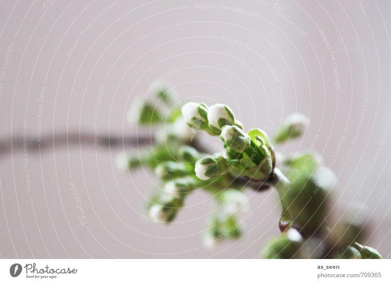 Spring explosion Natur schön grün weiß Pflanze Baum Umwelt Frühling Holz braun Garten Wachstum Klima authentisch frisch Beginn