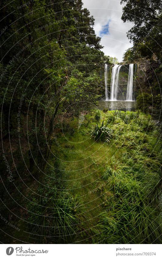 Wasserfall Natur Ferien & Urlaub & Reisen schön grün Pflanze Landschaft Abenteuer exotisch Neuseeland