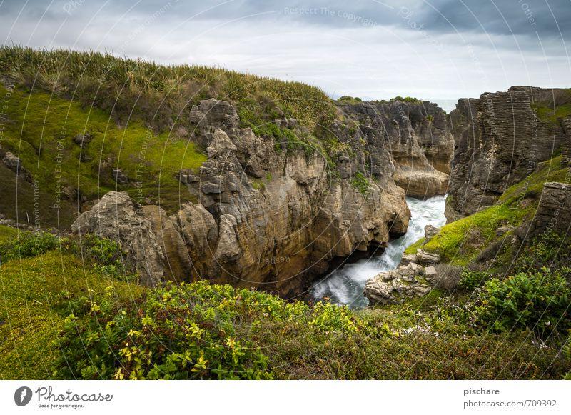 Neuseeland Ferien & Urlaub & Reisen Landschaft Küste Gras natürlich Felsen Abenteuer exotisch