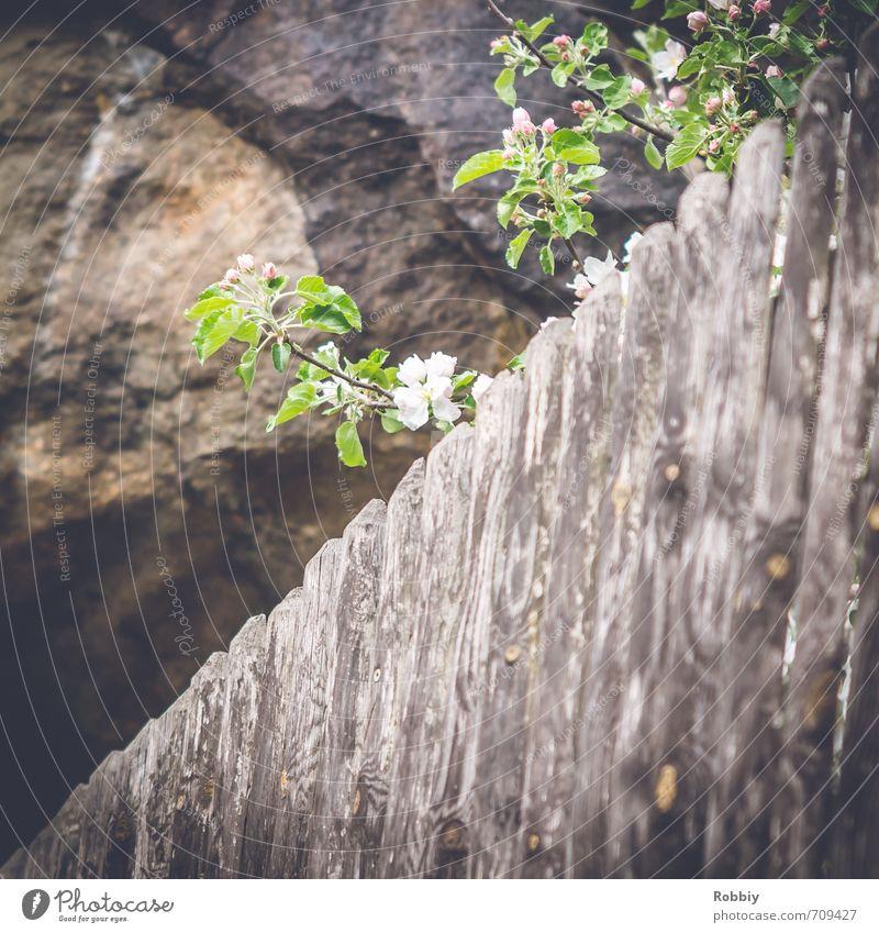 Über den Zaun geschaut Natur grün Pflanze Baum Umwelt Frühling Blüte grau Holz Stein natürlich braun Felsen Blühend Neugier
