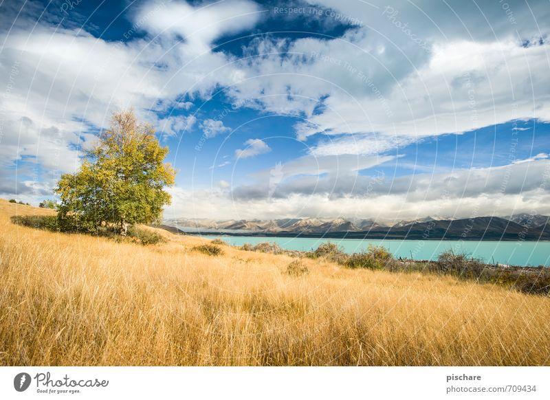 Herbst Natur schön Baum Landschaft Wolken gelb Wiese Gras natürlich Schönes Wetter Jahreszeiten Neuseeland