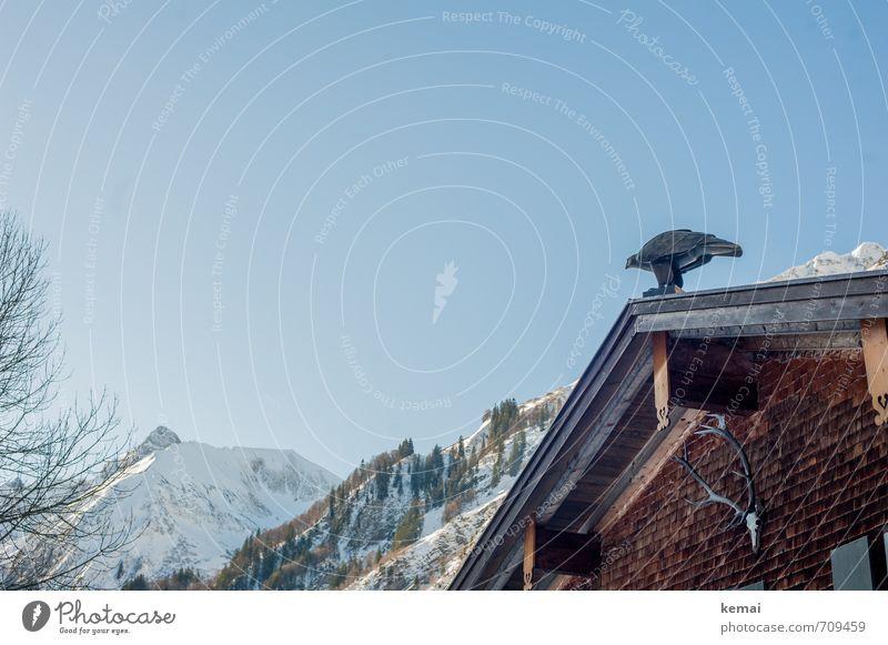 Haustiere Himmel blau Landschaft Haus Winter Berge u. Gebirge Schnee Holz Vogel Fassade Eis frisch Schönes Wetter Dach Gipfel Frost