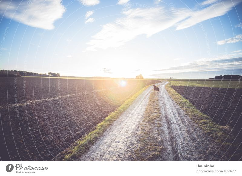 Hund im Gegenlicht Erholung ruhig wandern Umwelt Natur Landschaft Tier Erde Himmel Wolken Sonne Sonnenlicht Frühling Schönes Wetter Baum Gras Wiese Feld Bayern