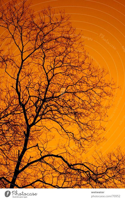 orange sky Himmel Baum rot schwarz Ast