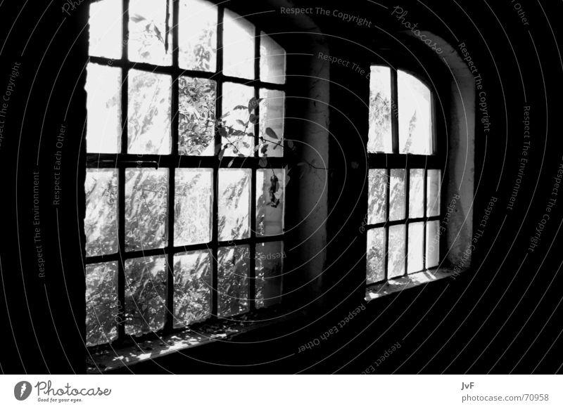 aLtAltAlT... Fenster verfallen Licht gebrochen Militärgebäude Demontage Verfall window alt schäbig Pflanze