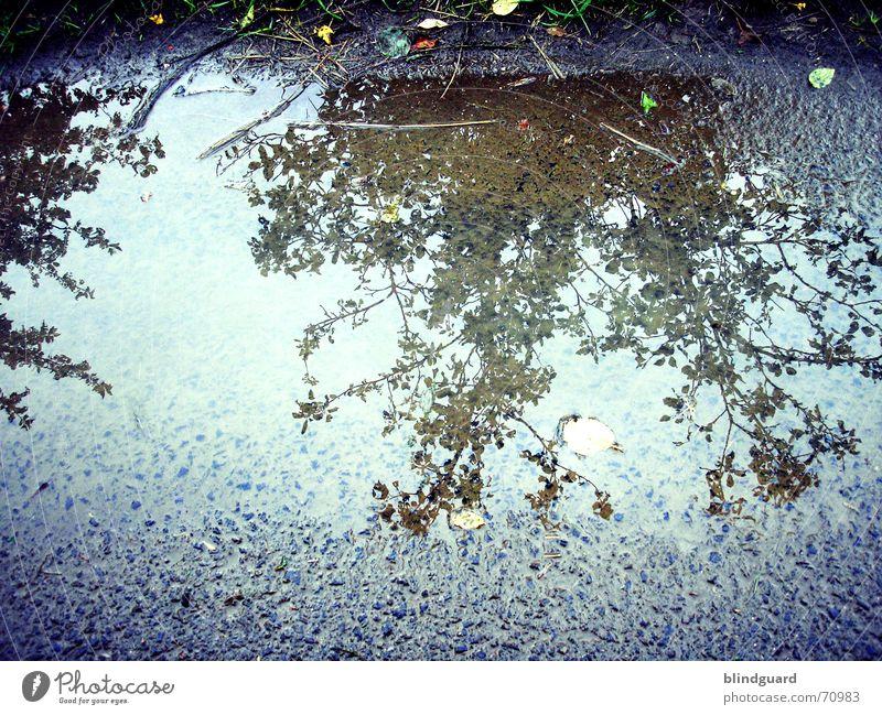 Spiegelverkehrt Wasser Baum Sommer Blatt Straße Regen Sträucher Fußweg Pfütze Wegrand