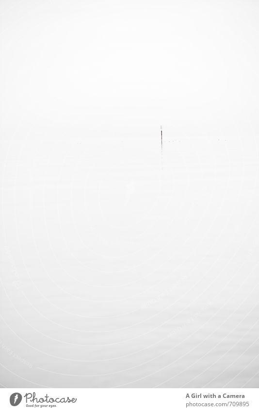 AST I Stille Natur weiß ruhig Umwelt außergewöhnlich See Nebel elegant ästhetisch Seeufer Originalität Pfosten schlechtes Wetter Bodensee