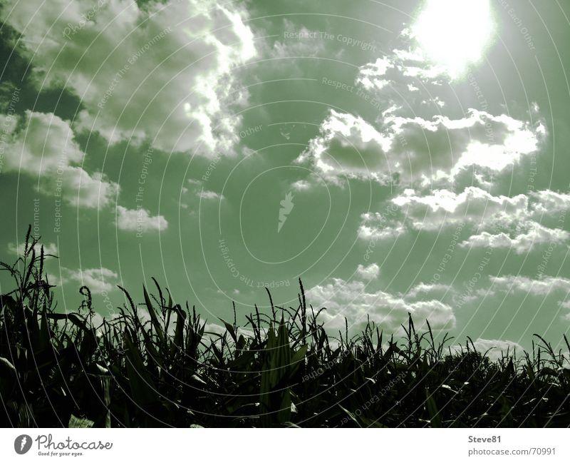 Feld Natur Himmel Sonne grün Wolken Erholung Landschaft Stimmung Hoffnung Vertrauen blenden Optimismus Mais