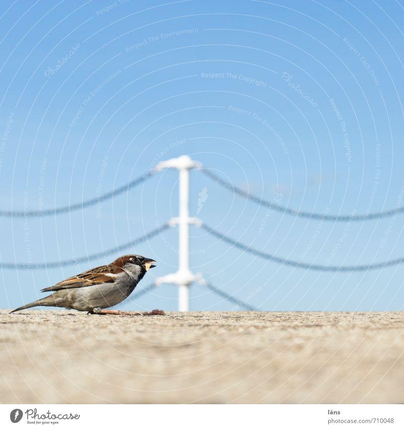 Abstauber Himmel Vogel Barriere Fressen Kette Spatz