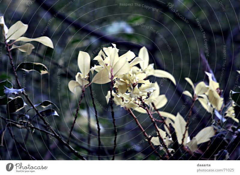 Kew Gardens Natur Wind Großbritannien