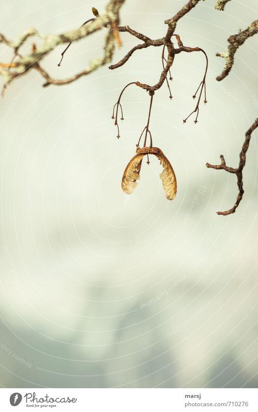 is mir wurscht   dass es jetzt Frühling ist ... Natur alt Pflanze Baum Winter Traurigkeit Herbst Tod klein Holz natürlich oben braun Zusammensein trist