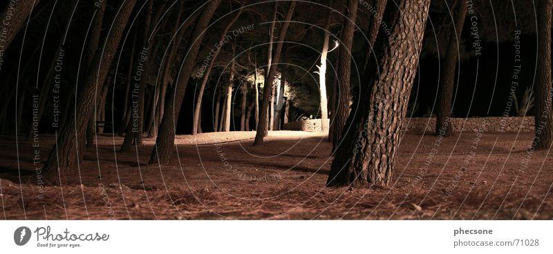 Treesome Baum Wald dunkel Mauer Wege & Pfade braun Fußweg Nadelbaum Holzmehl Aloe