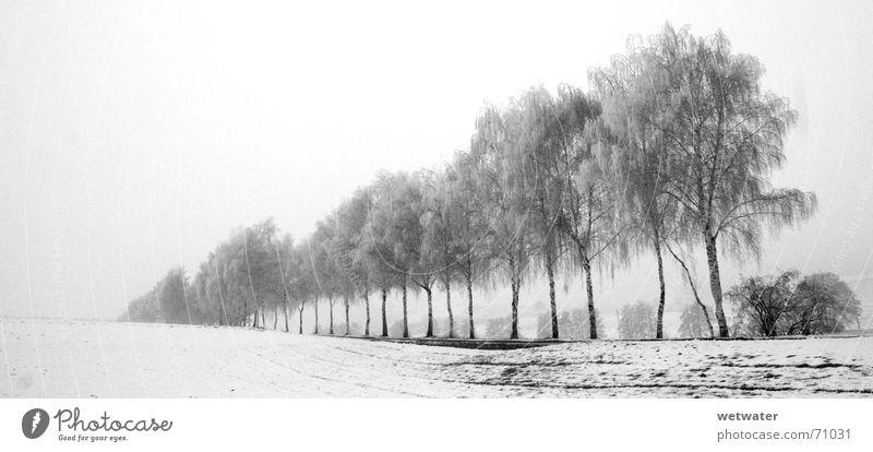 white day weiß kalt Winter Baum Allee schwarz trüb Nebel cold Schnee snow tree row Reihe Strukturen & Formen black Ast Tod death fog