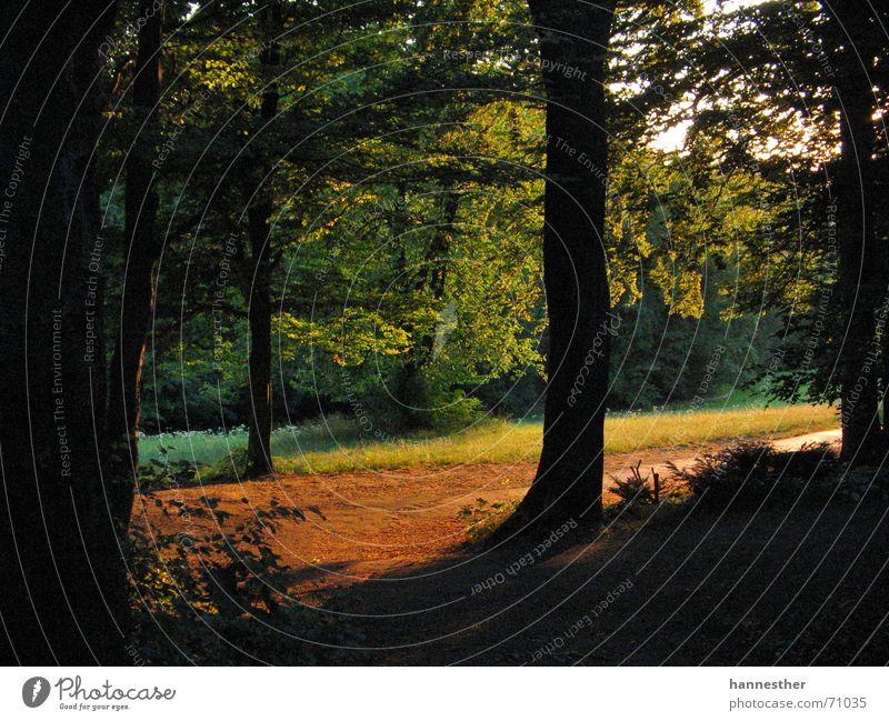 wie es in den wald hinein schallt.. Natur grün Baum Sommer Einsamkeit Blatt ruhig Wald Wiese Wärme Wege & Pfade Glück Traurigkeit Zufriedenheit frisch Trauer