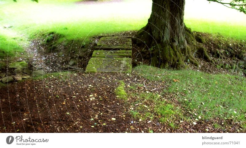 In eine andere Welt! alt Pflanze blau schön Sommer Wasser Baum Erholung ruhig Leben Wiese Gras Küste Holz träumen glänzend