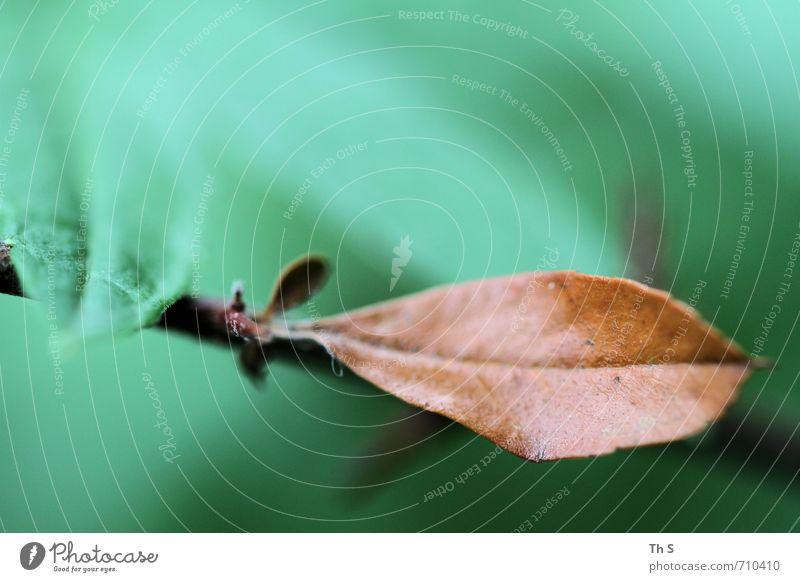 Blatt Natur schön Farbe Pflanze Bewegung natürlich Gesundheit außergewöhnlich elegant Zufriedenheit frei authentisch ästhetisch einfach Blühend