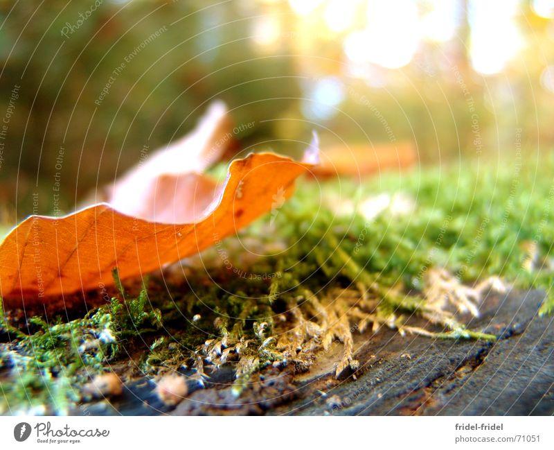 transparent autumn Blatt Baumstamm Baumstumpf Wald Herbst grün braun Jahreszeiten Holz hell