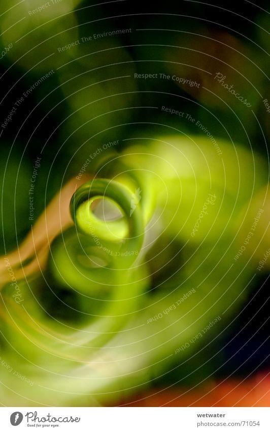 grüne spirale Natur Pflanze Leben Wachstum Spirale Außerirdischer außerirdisch