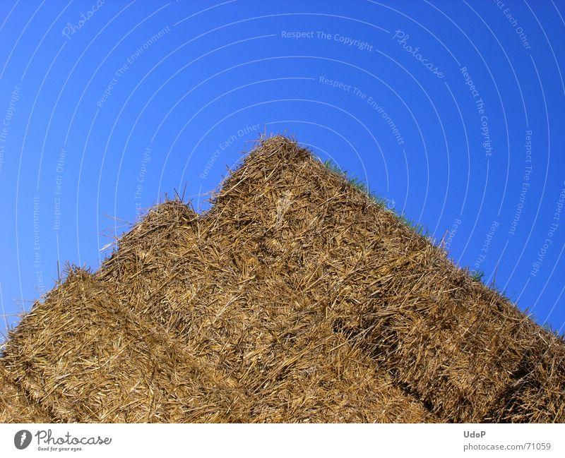 Postägyptischer Pyramidenbau Stroh gelb Landwirtschaft eckig Himmel blau gold verrückt Sommer