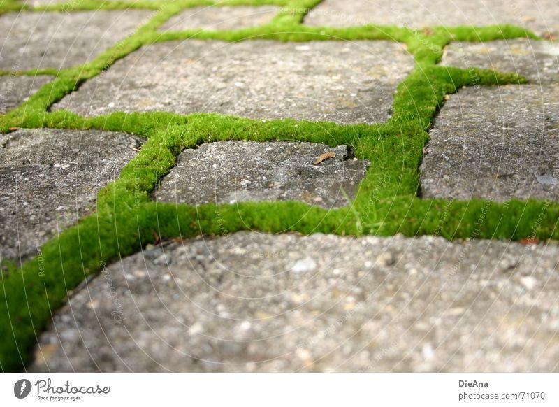 grüne Wege (3) pflastern Furche bewachsen frisch Sommer Natur Kopfsteinpflaster Bauernhof moss cobblestone cobbled chink overgrown fresh Moos