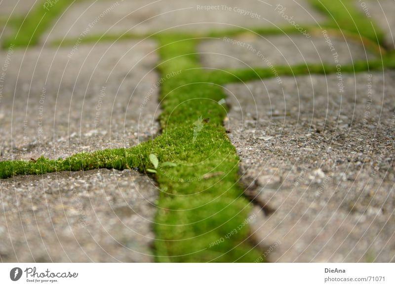 grüne Wege (4) pflastern Furche bewachsen frisch Sommer Natur Kopfsteinpflaster Bauernhof moss cobblestone cobbled chink overgrown fresh Moos