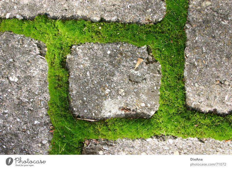 alle Richtungen möglich pflastern Furche bewachsen grün frisch Sommer Natur Kopfsteinpflaster Bauernhof moss cobblestone cobbled chink overgrown fresh Moos