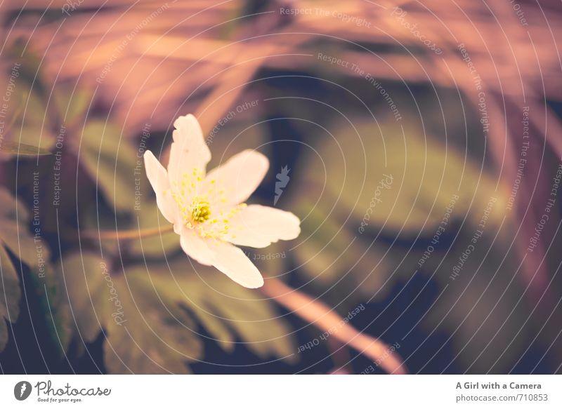 AST 7 I ich bin nun auch da Natur schön weiß Pflanze Blume Umwelt Frühling Garten Wachstum Blühend herausragen