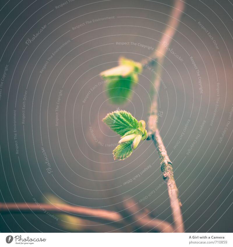 Ast 7 I .... und wir auch Umwelt Natur Pflanze Frühling Baum Wachstum Blütenknospen Beginn Blatt grün Gedeckte Farben Außenaufnahme Nahaufnahme Detailaufnahme