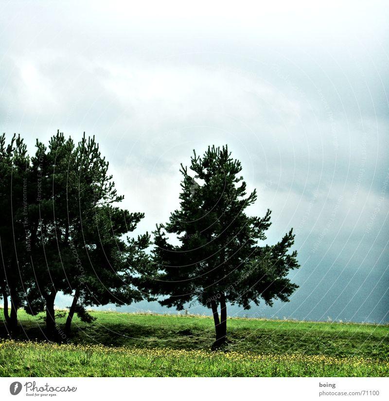 Kiefer im Karwendel Natur schön Baum Freude Ferien & Urlaub & Reisen Wald Wiese wandern Nebel Wetter Ausflug Aktion Frieden Fußweg Regenbogen Alm