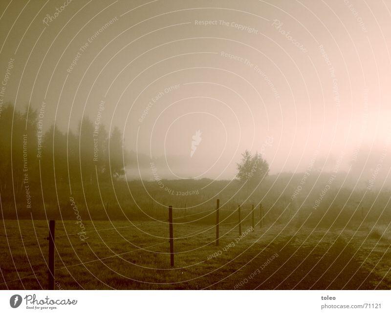 Morgennebel I Nebel Zaun Baum Wiese Wald See Stimmung trüb Schleier Licht dunkel Trauer Hoffnung Verzweiflung Außenaufnahme Landschaft Garten seelandschaft