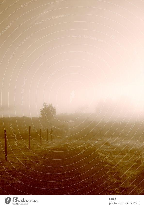Morgennebel II Nebel Stimmung Trauer See ungewiss Morgendämmerung Traurigkeit Wasser seenlandschaft Wege & Pfade Ziel