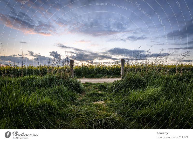 Into the Rapsfeld... Ausflug Ferne Freiheit wandern Umwelt Natur Landschaft Pflanze Himmel Wolken Frühling Sommer Gras Wiese Feld Duft blau gelb grün Optimismus