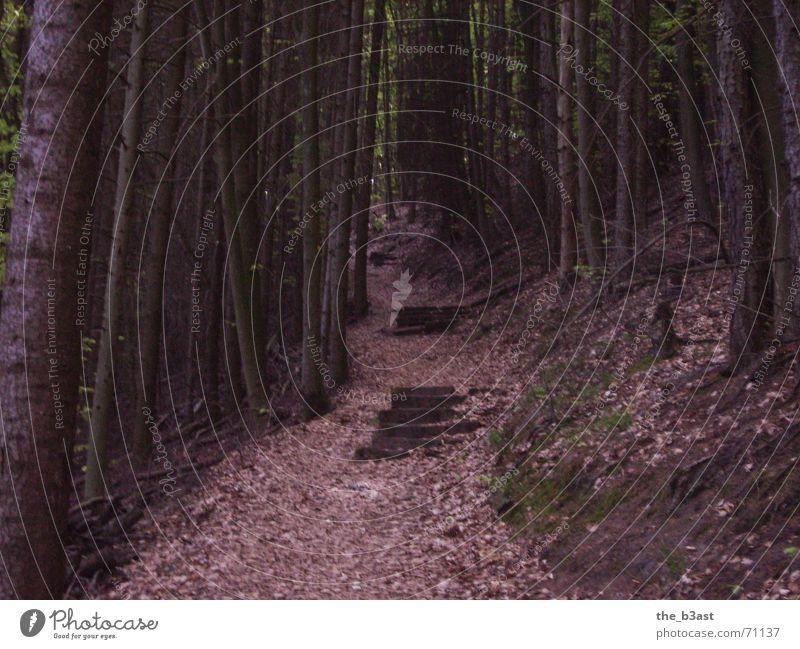 Stairway 2 Heaven Wald Baum Blatt wandern Treppe Wege & Pfade Leiter