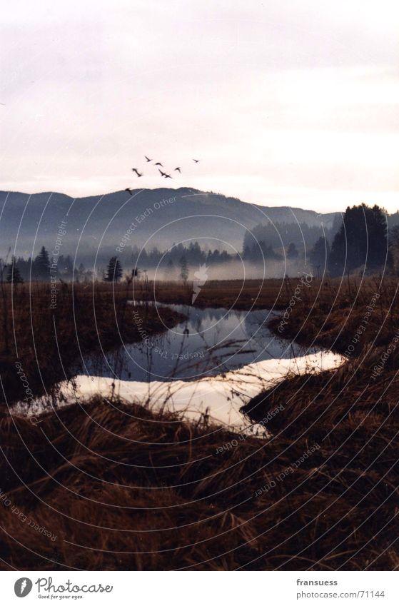 bayrisches idyll II Nebel Oberammergau Vogel Bayern Landschaft Berge u. Gebirge Fluss Idylle Natur friedlich
