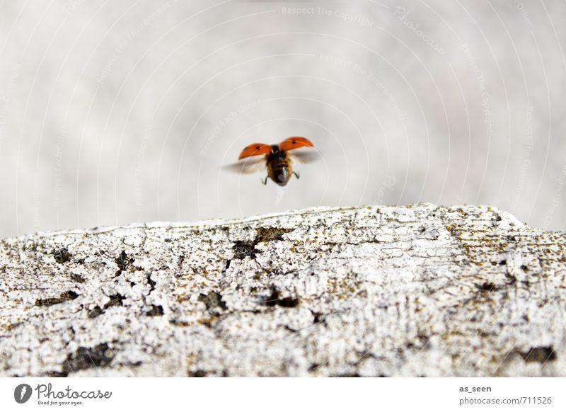 Yipieeh! Natur weiß Sommer rot Tier schwarz Umwelt Frühling klein Glück Stein natürlich springen Garten Luft Erde
