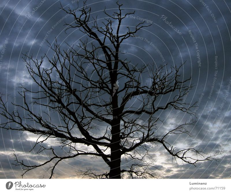 Toter Baum Himmel Blatt Wolken dunkel Tod kalt Herbst Traurigkeit Stimmung Wetter Angst Romantik Trauer Ast Sturm