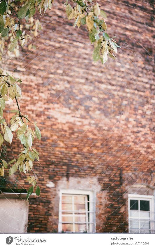 Baumgrenze Stadt Pflanze Baum Wand Mauer Schönes Wetter Backsteinwand Ziegelbauweise