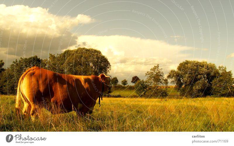 Ein schöner Rücken .... Sommer Sonne Freude Tier Wiese Freiheit Glück Gesundheit Zufriedenheit Frieden Dorf Landleben Kleinstadt Almosen Schlachthof Skandal