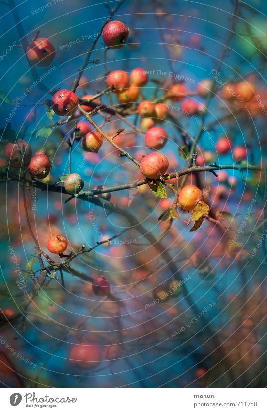 echt l bio Lebensmittel Frucht Apfel Ernährung Bioprodukte Vegetarische Ernährung Vitamin Natur Sommer Herbst Apfelbaum frisch Gesundheit natürlich genießen
