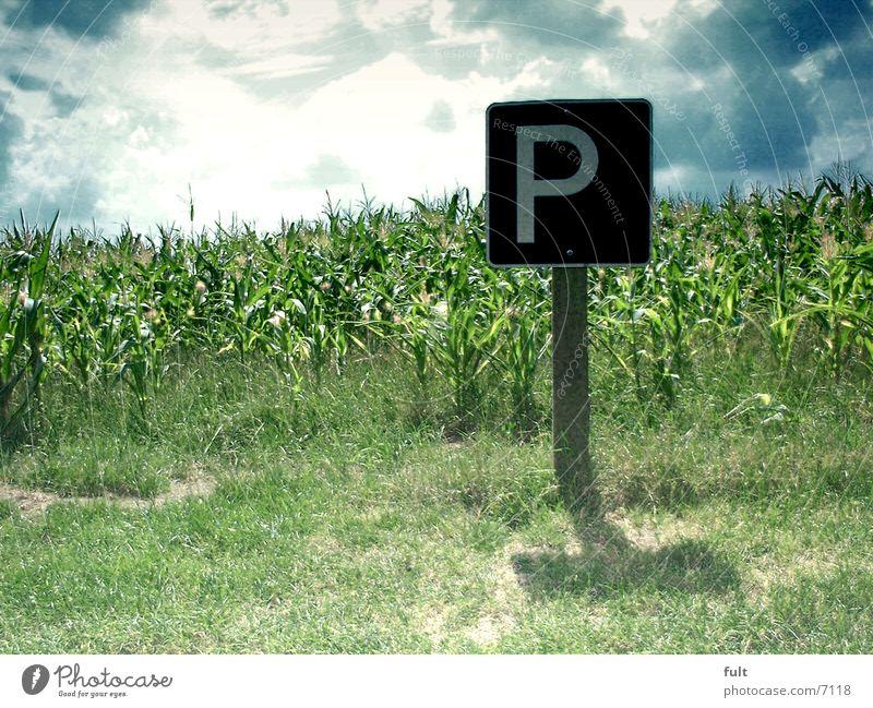 parken Himmel Schilder & Markierungen Horizont Rasen parken Mais